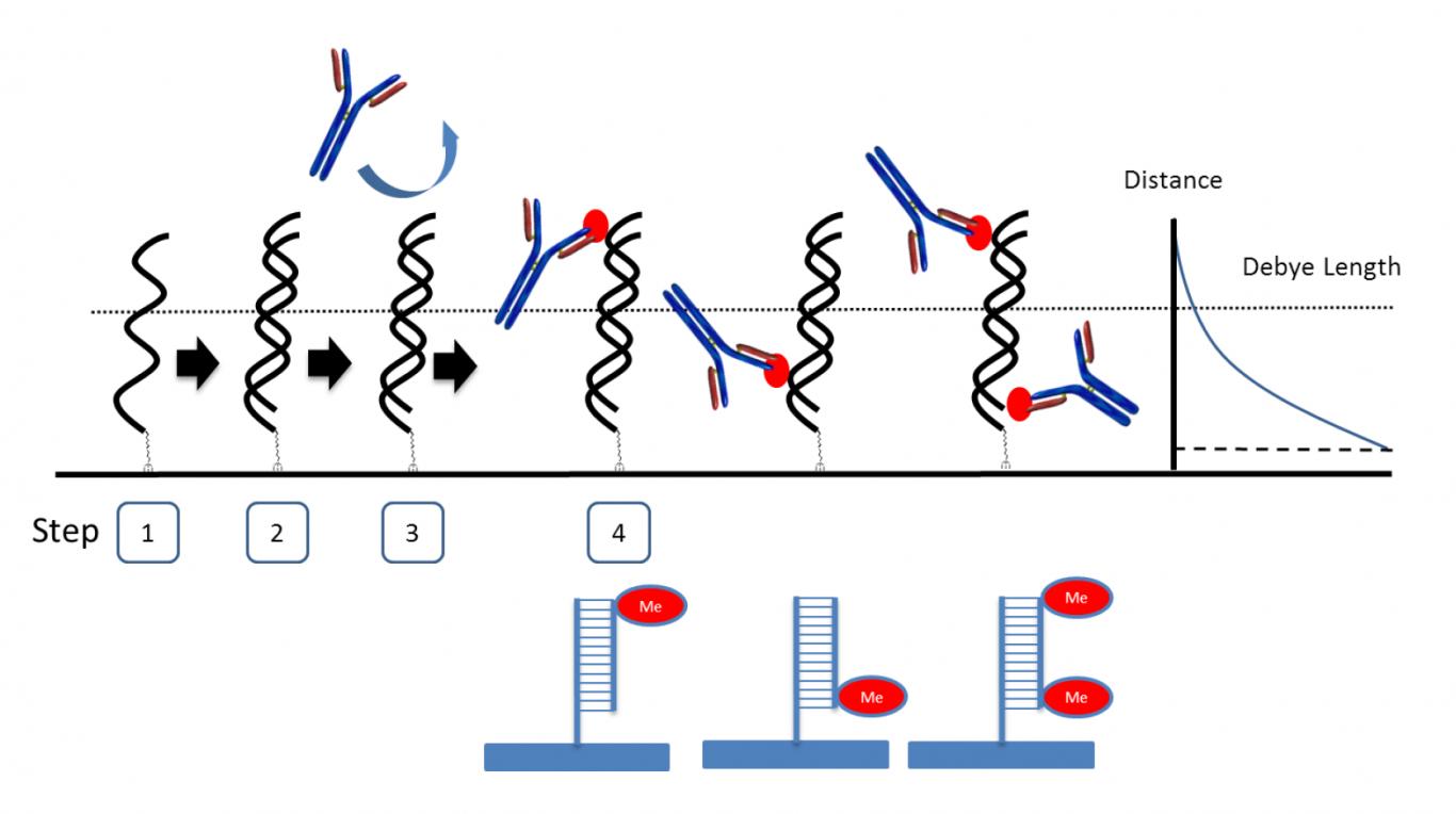 DNA_methylation_detection